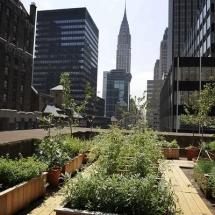 Stadslandbouw new york