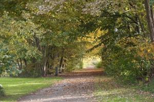geschikte planten en boomsoorten
