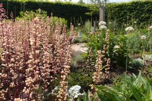 heuchera bloemen planten