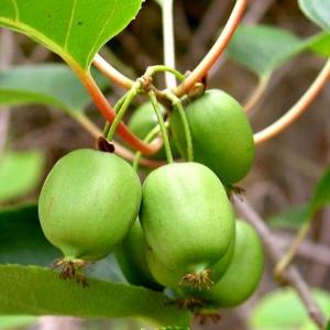 fruit stadslandbouw eetbaar