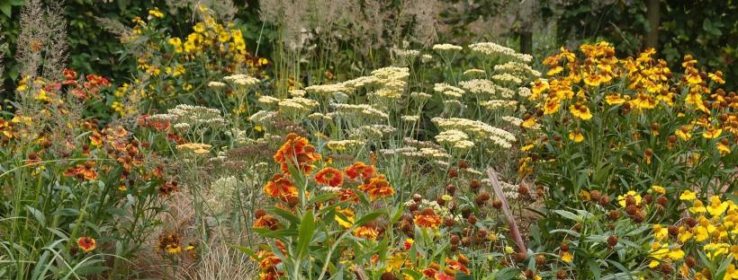 border opzet planten sfeer