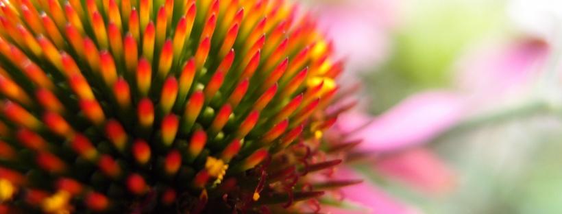 blog planten tuin