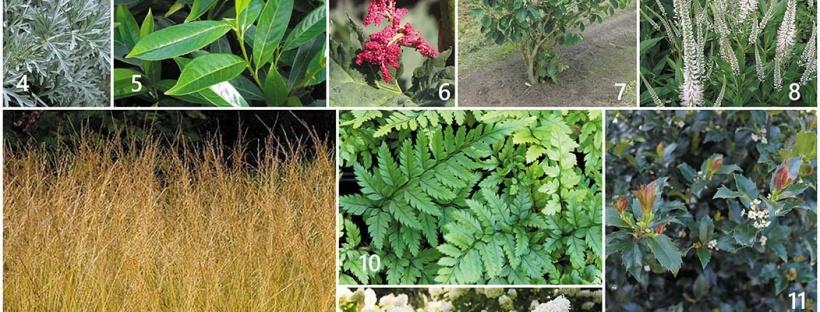 tuinontwerp sfeer beplanting
