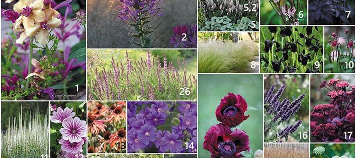 tuinontwerp beplanting beplantingsplan borders